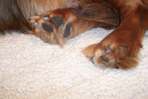 What Can I Use To Clean My Dogs Stinky Ears